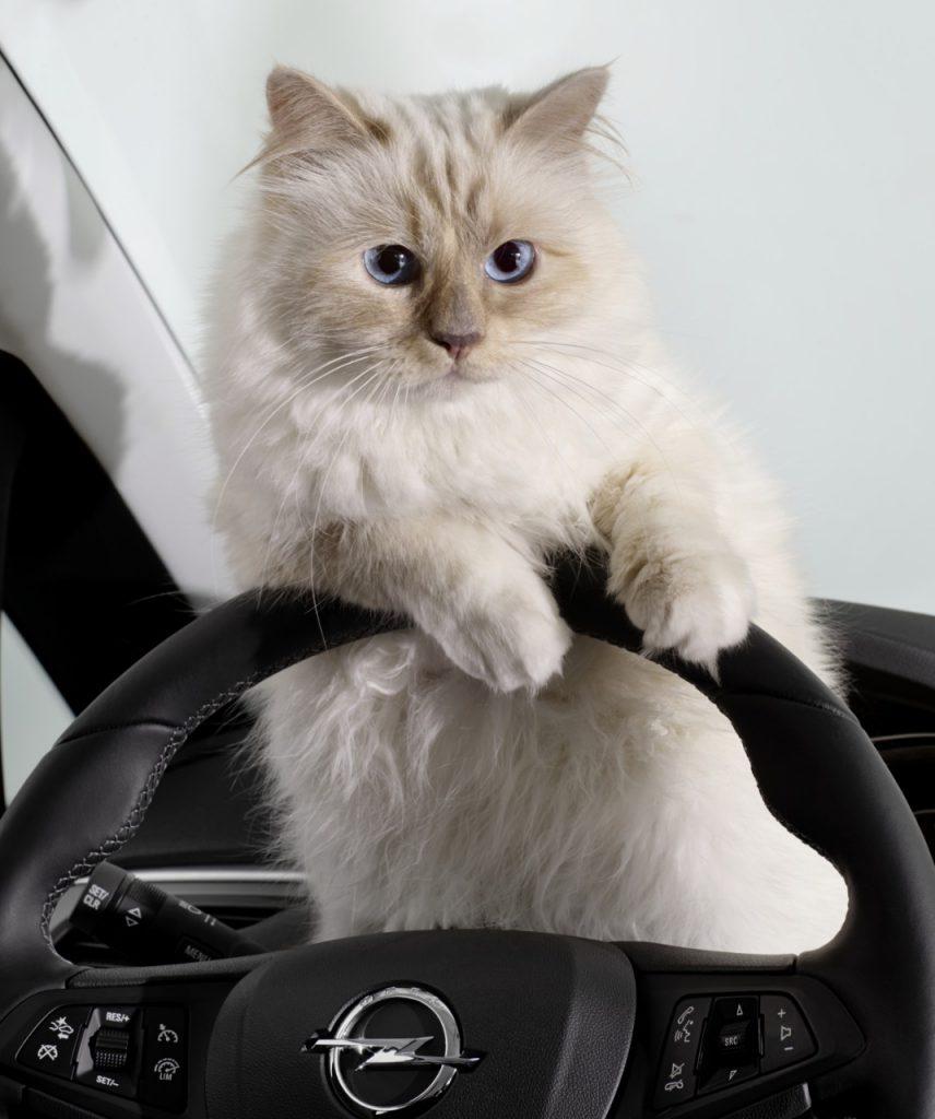 кошка Карла Лагерфельда Шуппет в рекламе Опель