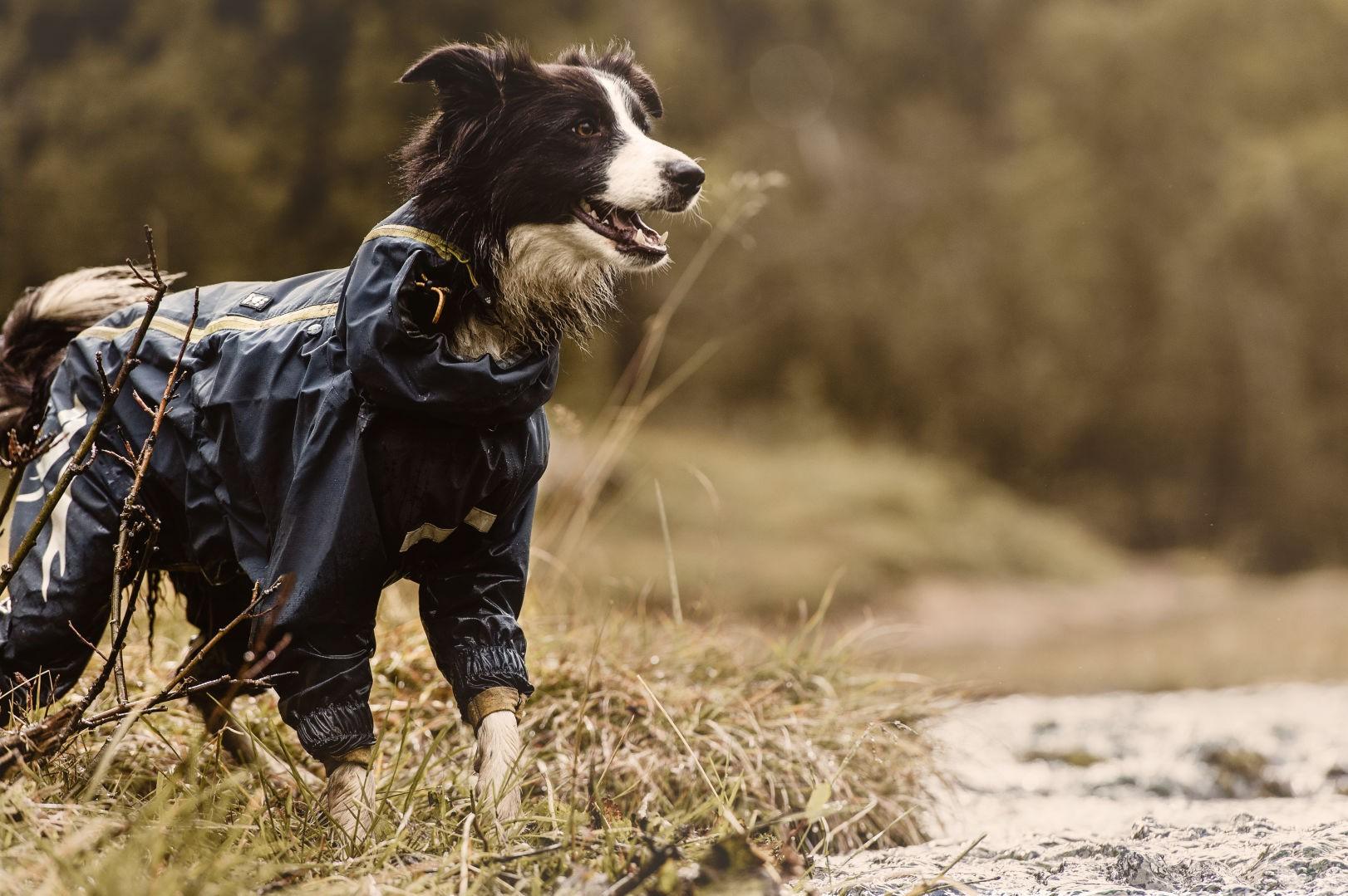Зимний комбинезон для собак черный