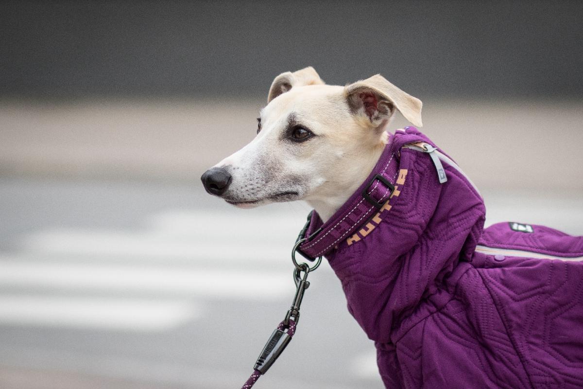Зимний комбинезон фиолетовый для собак