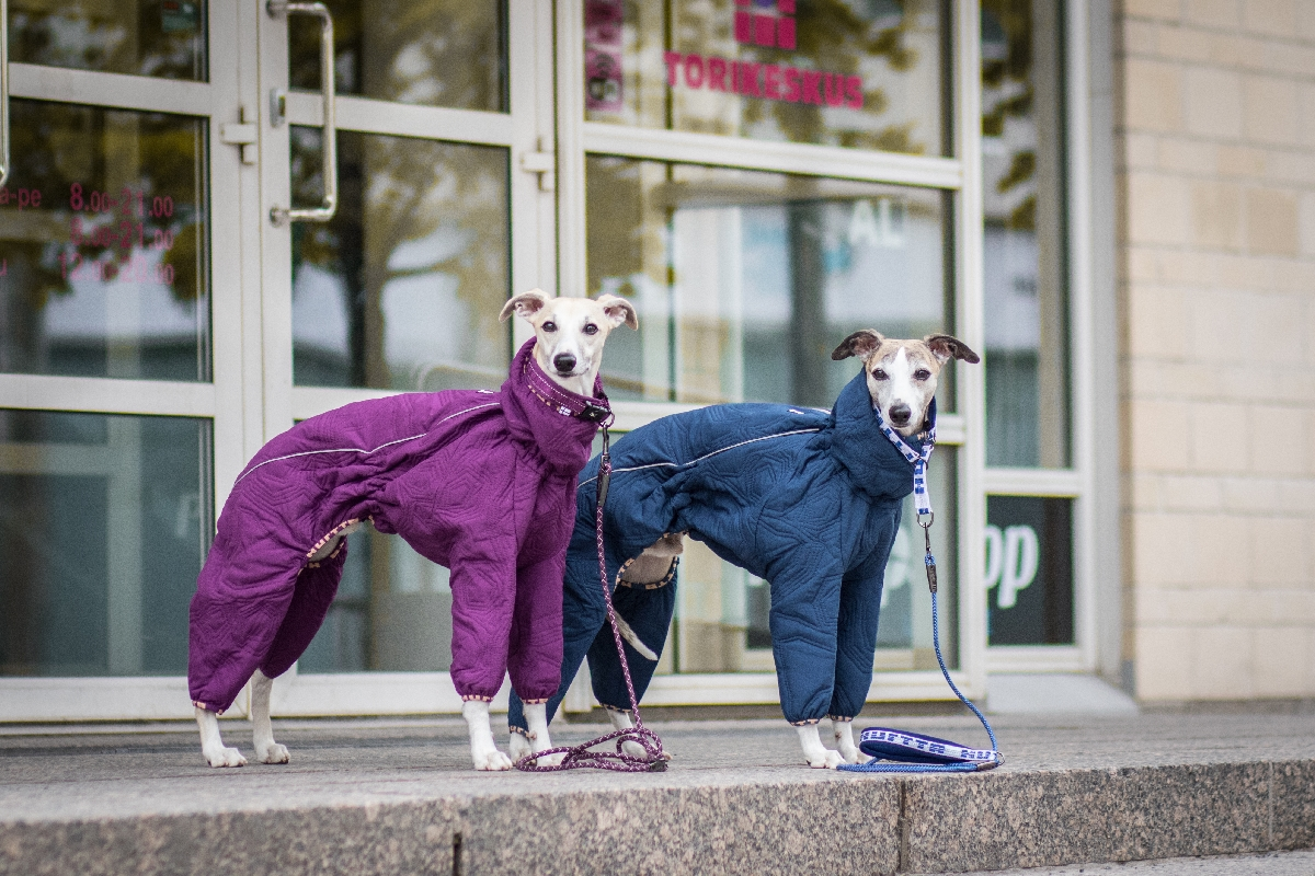 Зимний комбинезон для собак городской