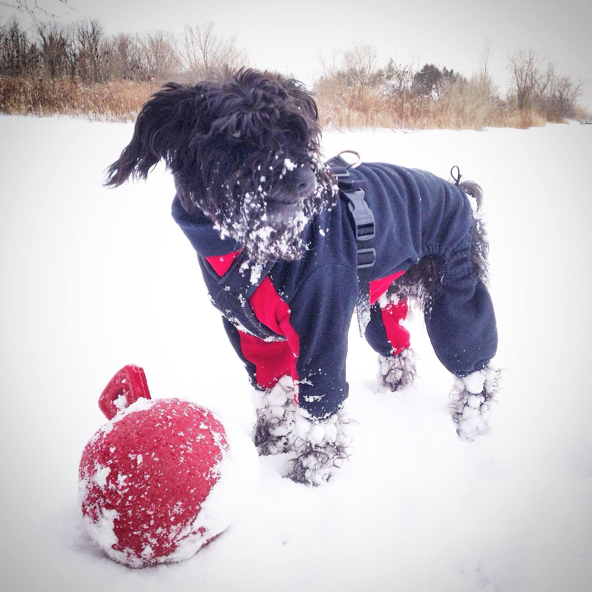 Зимний комбинезон для собак крупных