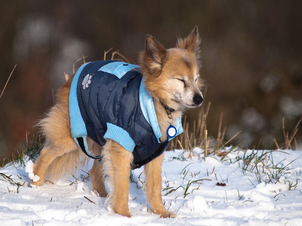 Зимний комбинезон куртка для собак