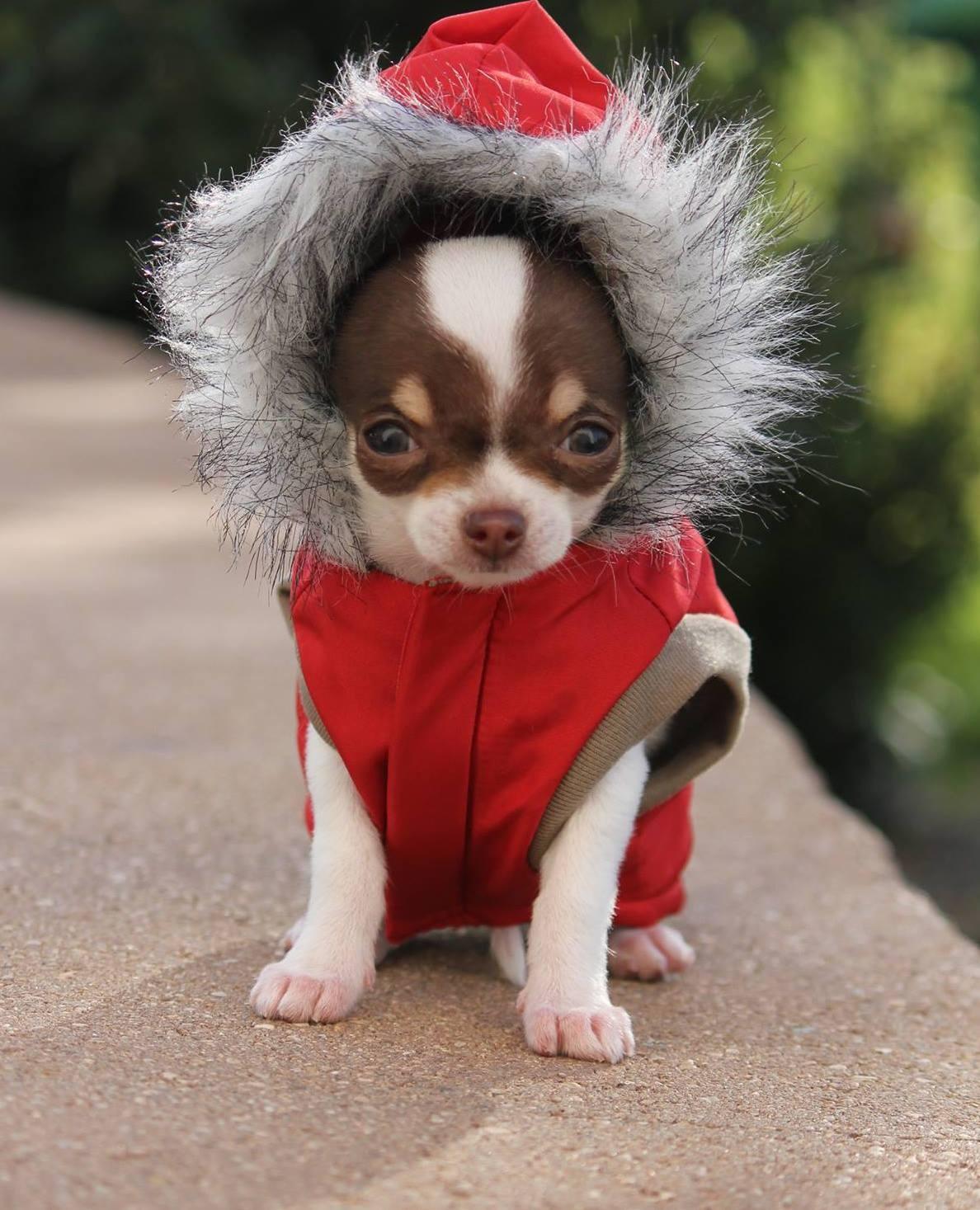 Зимний комбинезон для собак маленьких