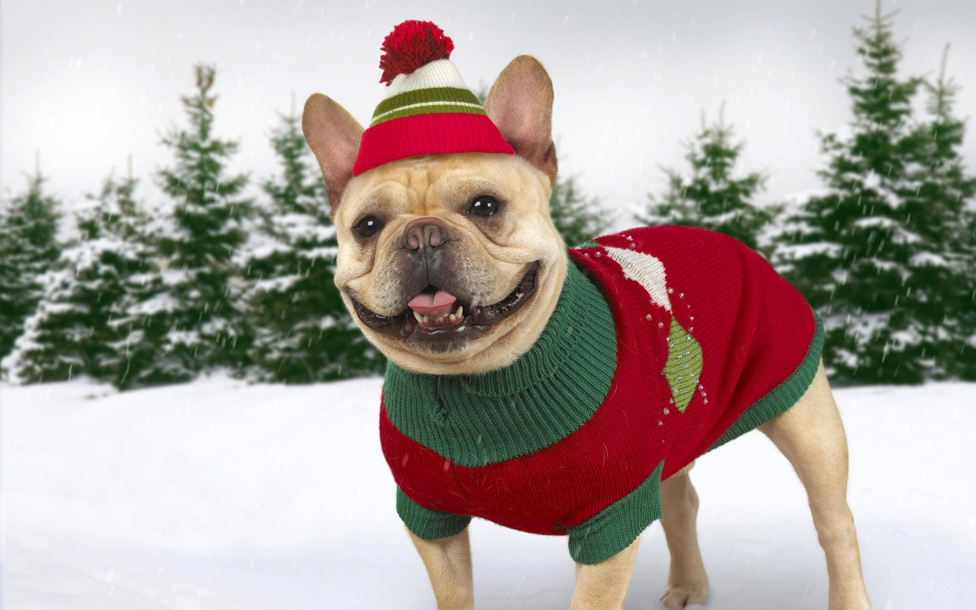 Зимний комбинезон для собак новогодний