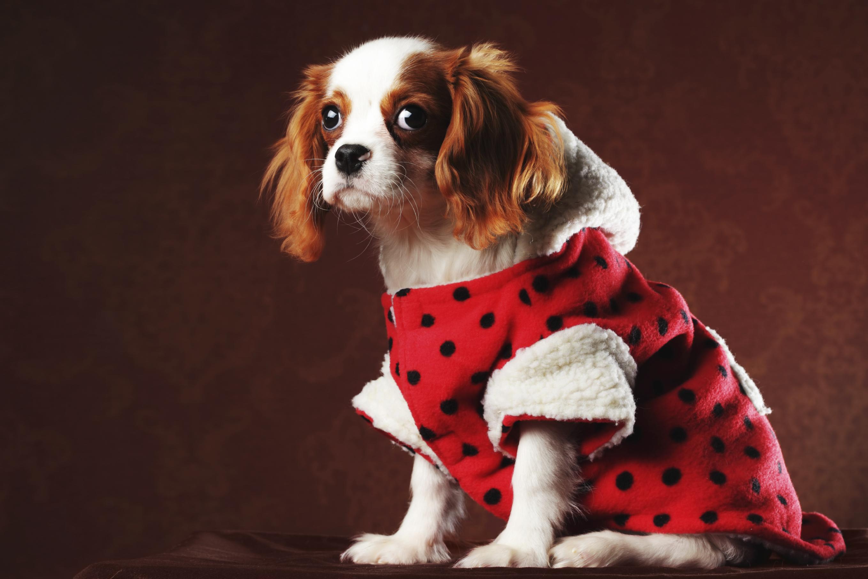 Зимний комбинезон для собак из плюша