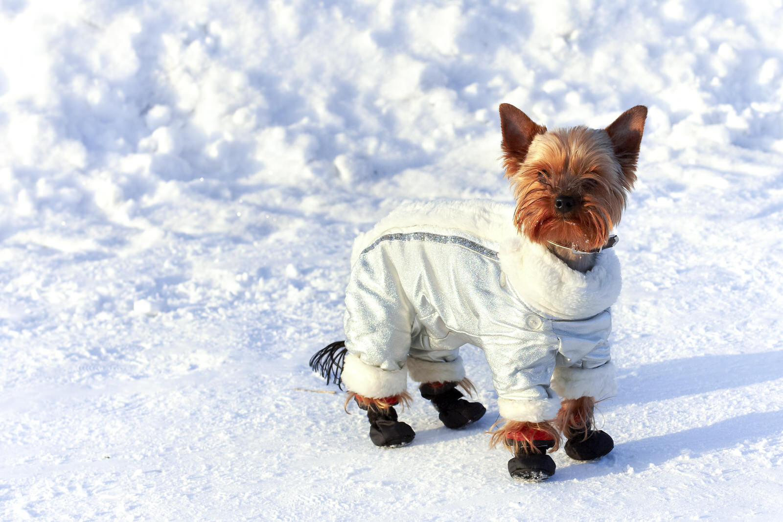 Зимний комбинезон для собак серый