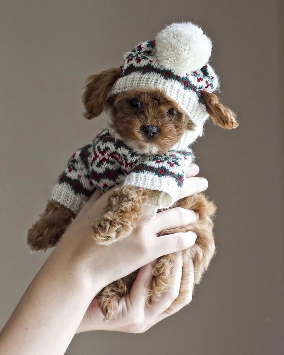Зимний комбинезон для щенка