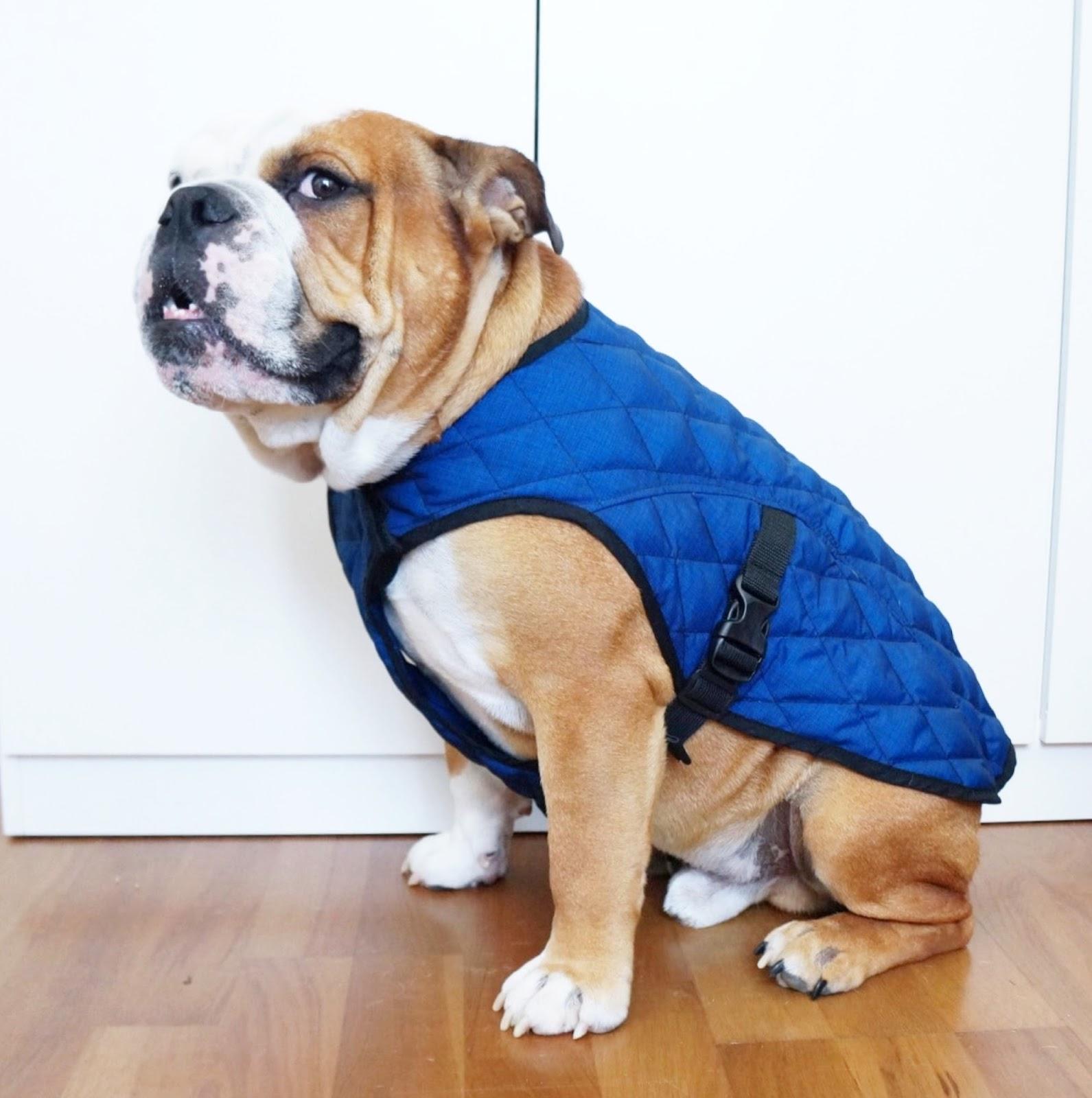 Зимний комбинезон для собак синий