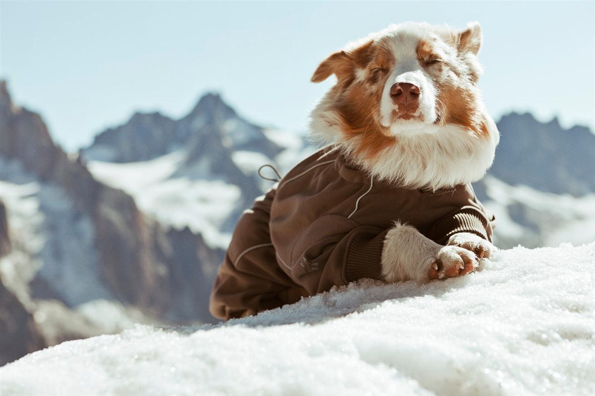 Зимний теплый комбинезон для собак