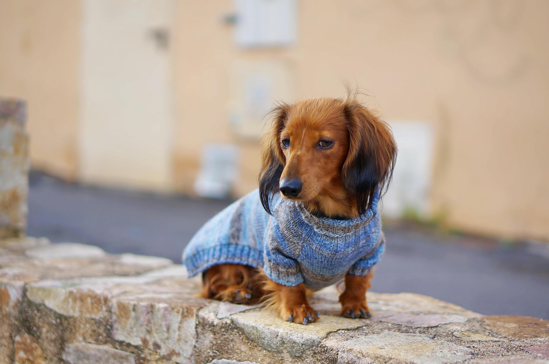 Зимний комбинезон для собак вязаный