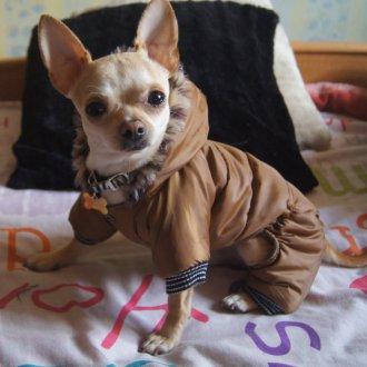 Зимний комбинезон для собак коричневый