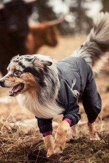 Зимний комбинезон для собак непромокаемый