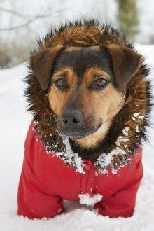 Зимний комбинезон для собак с опушкой