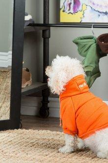 Зимний комбинезон для собак оранжевый