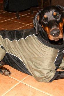 Зимний комбинезон для собак осенний