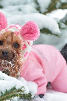 Зимний комбинезон для собак розовый