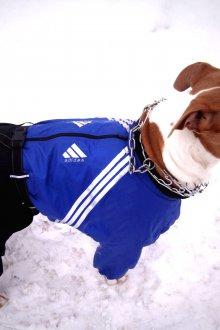 Зимний комбинезон для собак спортивный