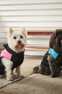 Зимний комбинезон для средних собак